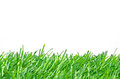 Artificial Turf for Soccer Field on White Background. Royalty Free Stock Photo