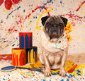Artist Dog Stock Photography