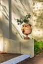 Artistic bonsai vase Royalty Free Stock Photo