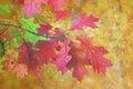 Artistic distressed autumn image