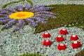 Artistic flower arrangement Royalty Free Stock Images