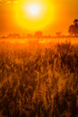 Artistic rendering of the glow of sunrise on okavango grasslands delta in botswana africa Stock Photography