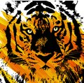 Artistic tiger face image represneting a of with spot of color Royalty Free Stock Photo