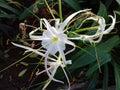 Artistic white flower