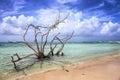 Aruba: Baby Beach