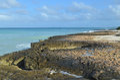 Wave Splashed Lava Rock Along the Aruba Coast Royalty Free Stock Photo