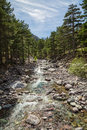 Asco river in Corsica with pine trees and snow covered mountain Royalty Free Stock Photo