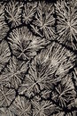 Ascorbic Acid crystals Stock Photography