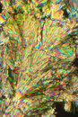 Ascorbic acid crystals very close crystallize seen through microscope in fold enlarging using polarized light Royalty Free Stock Photography
