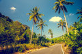 Asfalt road with palm trees Royalty Free Stock Photo