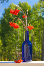 Ash berry bouquet in a blue bottle set outside Royalty Free Stock Photos