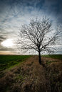 Ash tree in arable field semi mature an location against a dramatic sky Stock Images