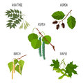 Ash tree leaves, aspen flowers, birch buds and maple keys