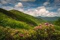 Asheville North Carolina Blue Ridge Parkway Spring Flowers Sceni