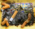 Ashtray full of cigarettes. Dirty tobacco texture Royalty Free Stock Photo