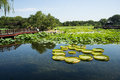 Asia China, Beijing, Old Summer Palace, lake landscape, lotus pond, Royalty Free Stock Photo