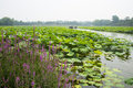 Asia China, Beijing, Old Summer Palace, lotus pond, the boat
