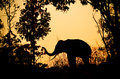 Asia elephant in the forest at sunset Stock Photography