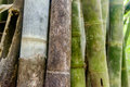 Asian Bamboo forest - abstract background. Royalty Free Stock Photo