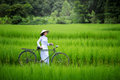 Asian beautiful woman with Vietnam culture traditional in green Royalty Free Stock Photo