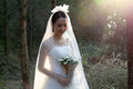 Asian bride wearing bridal gown standing in the pine forest Royalty Free Stock Photo