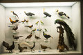 Asian china beijing national animal museum,animal specimens the museum science knowledge presentation show and ecological view Royalty Free Stock Photo