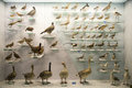 Asian china beijing national animal museum,animal specimens the museum science knowledge presentation show and ecological view Royalty Free Stock Images