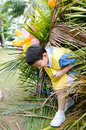 Asian cute boy playing in the park Royalty Free Stock Images