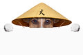 Asian dog with chinese hat behind banner Royalty Free Stock Image
