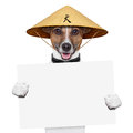 Asian dog with chopsticks and asia hat behind banner Royalty Free Stock Photo