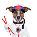 Asian dog with chopsticks and hat Royalty Free Stock Images