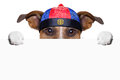 Asian dog with chopsticks and hat behind banner Stock Photo