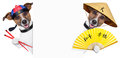 Asian dogs two with chopsticks and asia hat behind banner Stock Image