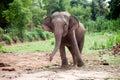 Asian elephant dance is joyfully young Royalty Free Stock Photo