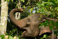 Asian elephant elephas maximus beautiful family of at khao yai national park thailand Stock Photos