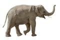 Cheerful elephant isolated on white Royalty Free Stock Photo