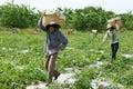 Asian farmer, agriculture field, Vietnamese, watermelon