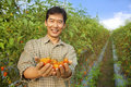Asian farmer holding tomato Royalty Free Stock Photography