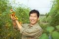 Asian farmer holding tomato