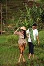 asian farmers Royalty Free Stock Photo