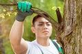 Asian gardener cropping branch Royalty Free Stock Photo