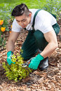 Asian gardener cropping a plant Royalty Free Stock Photo