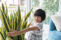 Asian girl hugging tree in vase at home. Royalty Free Stock Photo