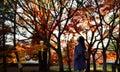 Asian girl walking in Japanese maple garden, Kyoto, Japan Royalty Free Stock Photo