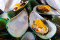Asian green mussel Royalty Free Stock Photography