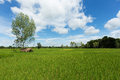 Asian landscape with ricefield asien nature blue sky and cumulus clouds Stock Images