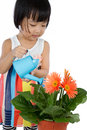 Asian Little Chinese Girl Watering Flower Royalty Free Stock Photo