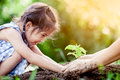 Asian little girl and parent planting young tree on black soil Royalty Free Stock Photo