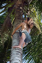 Asian native climbing palm tree Stock Photography