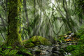 Asian Rain Forest